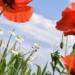 Le printemps de l'Aire: une saison lumineuse